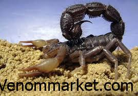 Advising and launching the scorpion, how can you earn money by fostering Scorpio?