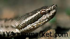 Snake life span is several years