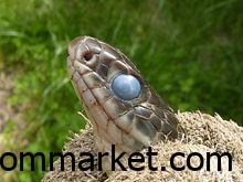 Snake Counseling and Setup What are the benefits of snakes to humans